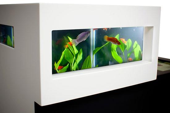 Les Aquariums Design Archiquarium